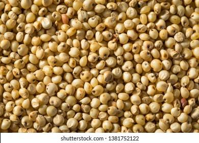 Raw Organic Sorghum Grain in a Bowl