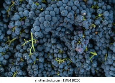 Raw organic sweet purple grapes background, wine grapes texture, top view.