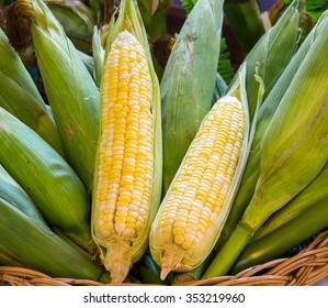 Raw Organic Yellow Sweet Corn Ready to Cook