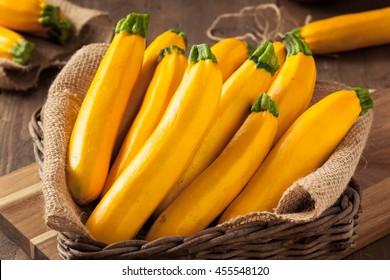Raw Organic Yellow Zucchini Squash Ready to Cut Up