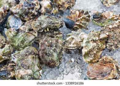 Raw oyster background and texture, organic sea food closeup