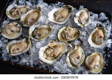 Raw Oysters on the Half Shell on a Bed of Crushed Ice: Shucked Atlantic oysters on a bed of crushed ice