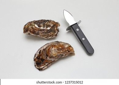 Raw Oysters and Shucker Knife With Short Blade