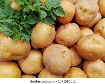 Raw potatoes pile harvest closeup & potatoes leaf on organic farm. Potatoes plant vegetable harvest from agriculture field. Potato crop ground top view. Fresh organic rural potatoes harvest in field.