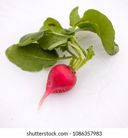 Raw radishes with leaves on white background in studio.
