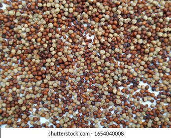 Raw Ragi is a rich in protein, fiber, calcium, iron, prevents from osteoporosis and cholesterol, strengthens bone. Pile and Heap of Ragi isolated in a white background