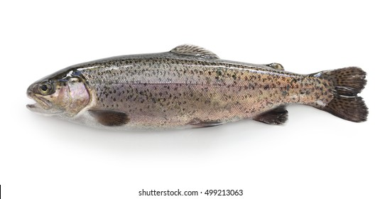 raw rainbow trout isolated on white background