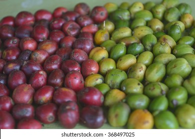 raw and ripe coffee berries