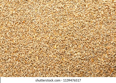 Raw rye as background. Healthy grains and cereals