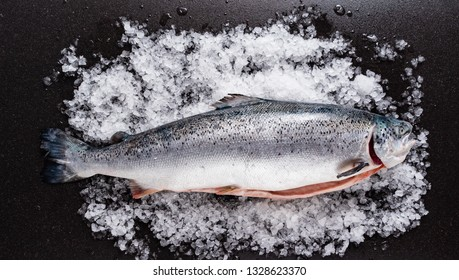 raw salmon fish on the ice