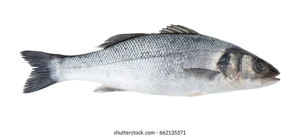 Raw sea bass fish isolated on white background
