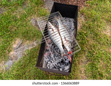 Raw sea Bass fish on charcoal stove ready to grill.