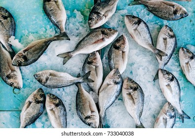 raw sea bream fish dorado in ice on market with copy space, top view