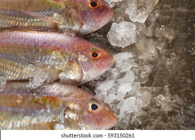Raw Sea bream fish with ice on metal background, top view