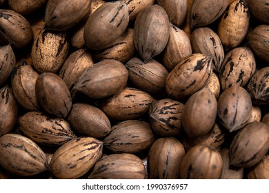 Raw in shell whole Pecan nuts