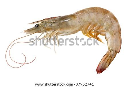 Raw Shrimp Stock Photo Edit Now 87952741 Shutterstock