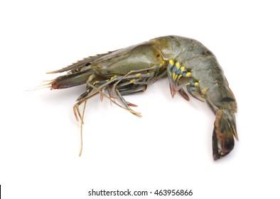 raw shrimp isolated on white
