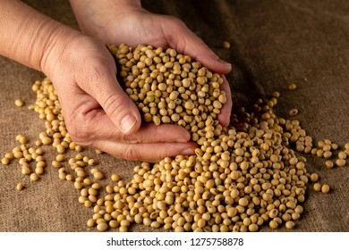 Raw soybeans in hands