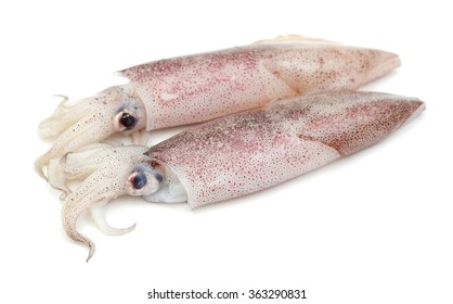 raw squids on white background