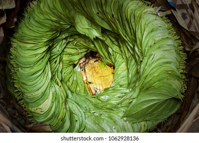 raw tobacco in myanmar