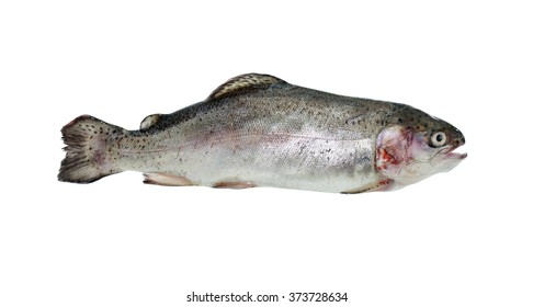Raw trout isolated on white background. Clipping path is included