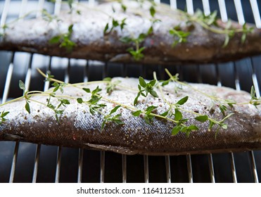 The raw trout with thyme