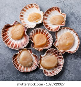 Raw uncooked Queen Scallops in shells on gray background