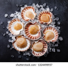 Raw uncooked Queen Scallops in shells on ice on dark background