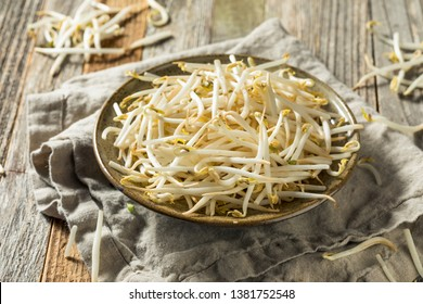Raw White Organic Bean Sprouts in a Bowl