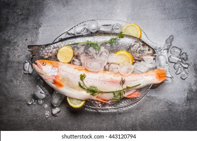Raw whole fish and Gold Rainbow trout in glass plate in the form of fish on concrete stone background with ice cubes, top view. Healthy or diet food concept