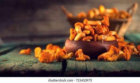 Raw wild chanterelles mushrooms in basket on old rustic wooden background. Organic Fresh chanterelle on a wood table. Soft focus.