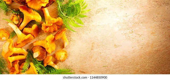 Raw wild chanterelles mushrooms on old rustic background. Organic Fresh chanterelle background on a table. Label border design