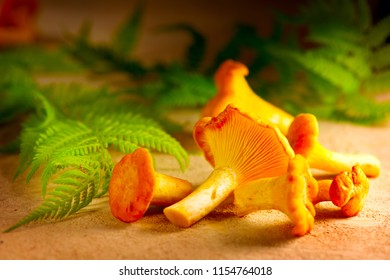 Raw wild chanterelles mushrooms on rustic background. Organic Fresh chanterelle on a table. Soft focus