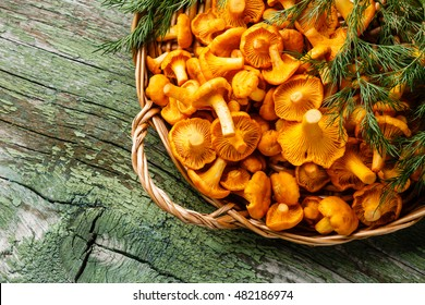 Raw wild mushrooms chanterelles in basket with dill on wooden background