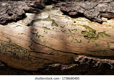 raw wood trunk with beautiful green sculptures made by wood worms