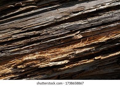raw wood trunk with beautiful wood pattern