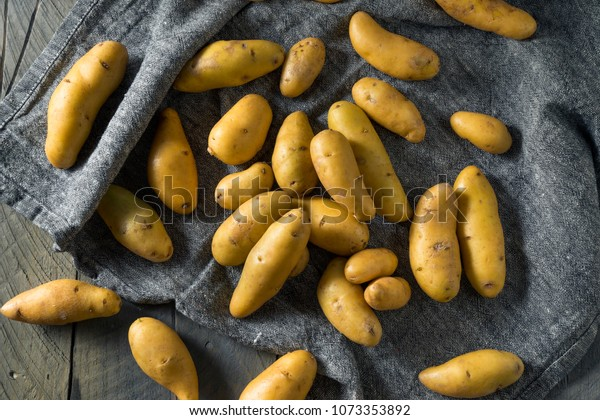 Raw Yellow Fingerling Potatoes Ready to Cook
