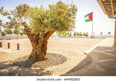 RAWABI, PALESTINIAN NATIONAL AUTHORITY, WEST BANK. June 27, 2014. Olive tree and Palestinian flag on the background - an abstract concept of the Palestinian statehood. Symbol of Palestinian freedom.