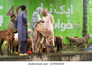 Goat Pakistan Images, Stock Photos & Vectors | Shutterstock