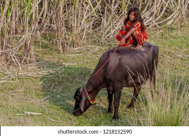 RAXAUL, INDIA - NOV 14: Unidentified Indian girl on a buffalo on Nov 14, 2013 in Raxaul, Bihar state, India. Bihar is one of the poorest states in India.