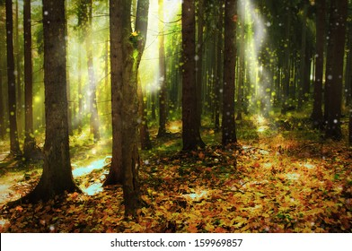 ray of light in autumn forest
