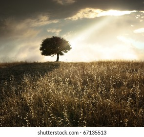 a ray of light breaks through the dramatic sky at sunset and hit an oak tree solitary