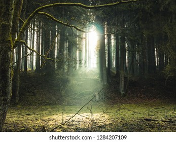 Ray of light shining through bare trees of a forest, meadow in foreground