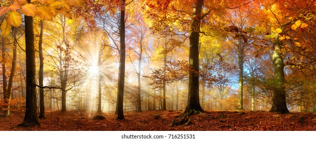 Rays of beautiful sunlight in a misty forest with warm vibrant colors in autumn