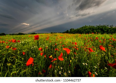 Rays in the field of poppies