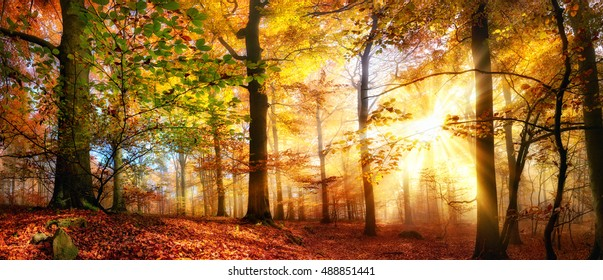 Rays Of Gold Sunlight In A Misty Forest With Warm Vibrant Colors Autumn