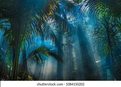 Rays of light between pam trees in jungle garden