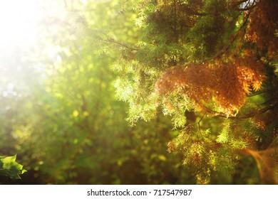 Rays of Light Lighting Juniper Tree