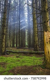 Rays of light shine through the trees in a bare forest