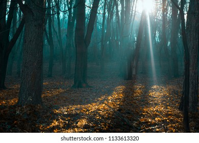 rays of light in the spring forest early in the morning